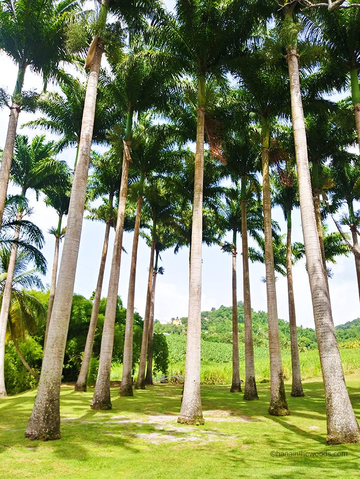 Découvrir l'île de la Martinique grâce à 5 activités gratuites