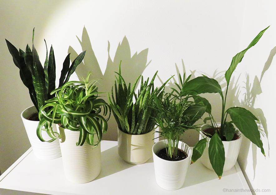 Comment purifier l'air intérieur grâce à 5 plantes ?
